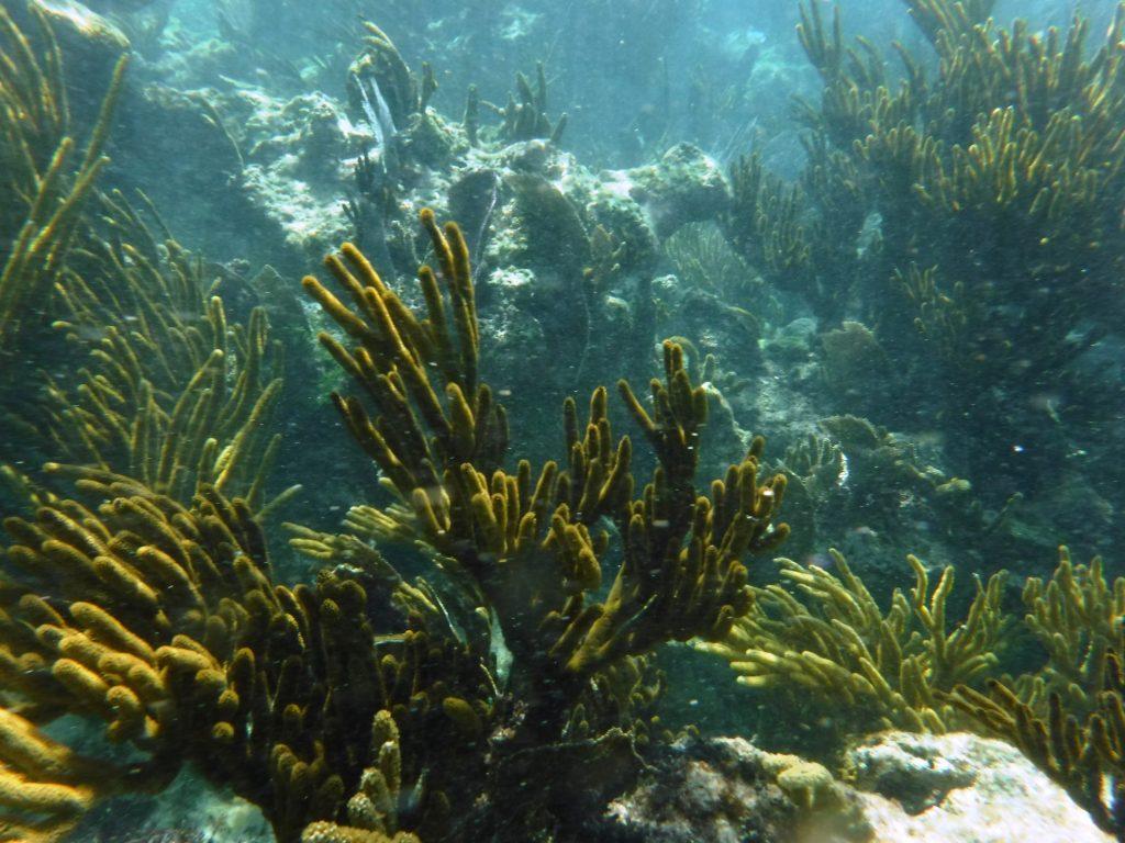 Xpu-Ha Coral